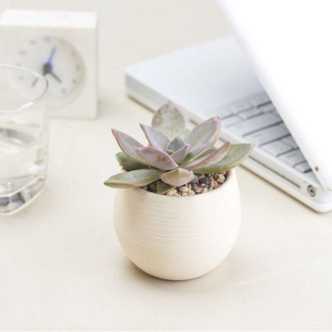 Creative Multi-meat Plant Plastic Flower Pots Stylish Office Mini Flower Pots Mini Flower Seedlings Nursery Pot,Random Color Delivery –  مصر