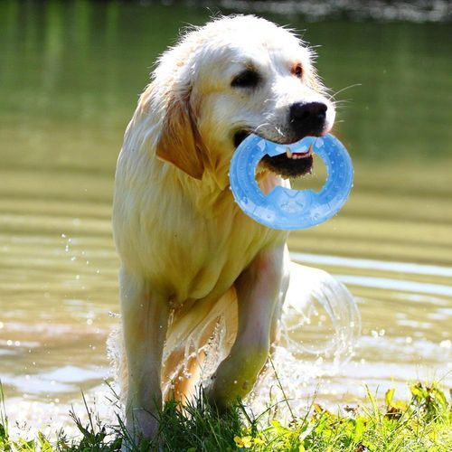 Funny Pet Dog Puppy Cat Freeze Frozen Chew Toy Fetch Traning Play Chew Toy Frisbee