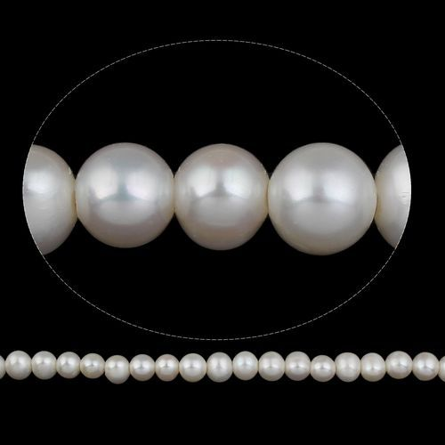 14a85dc293916 Fashion Potato Cultured Freshwater Pearl Beads Natural White 11-12mm Hole  2.5mm. 776.00 جنية مصرى